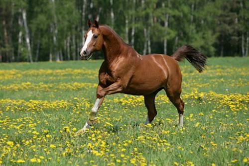 http://lovehorse.ucoz.ru/440323931.jpg